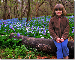 Bluebells at Merrimac Farm