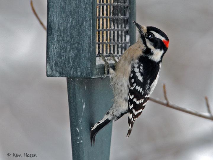 Backyard Bird List Northern Virginia Suburbs